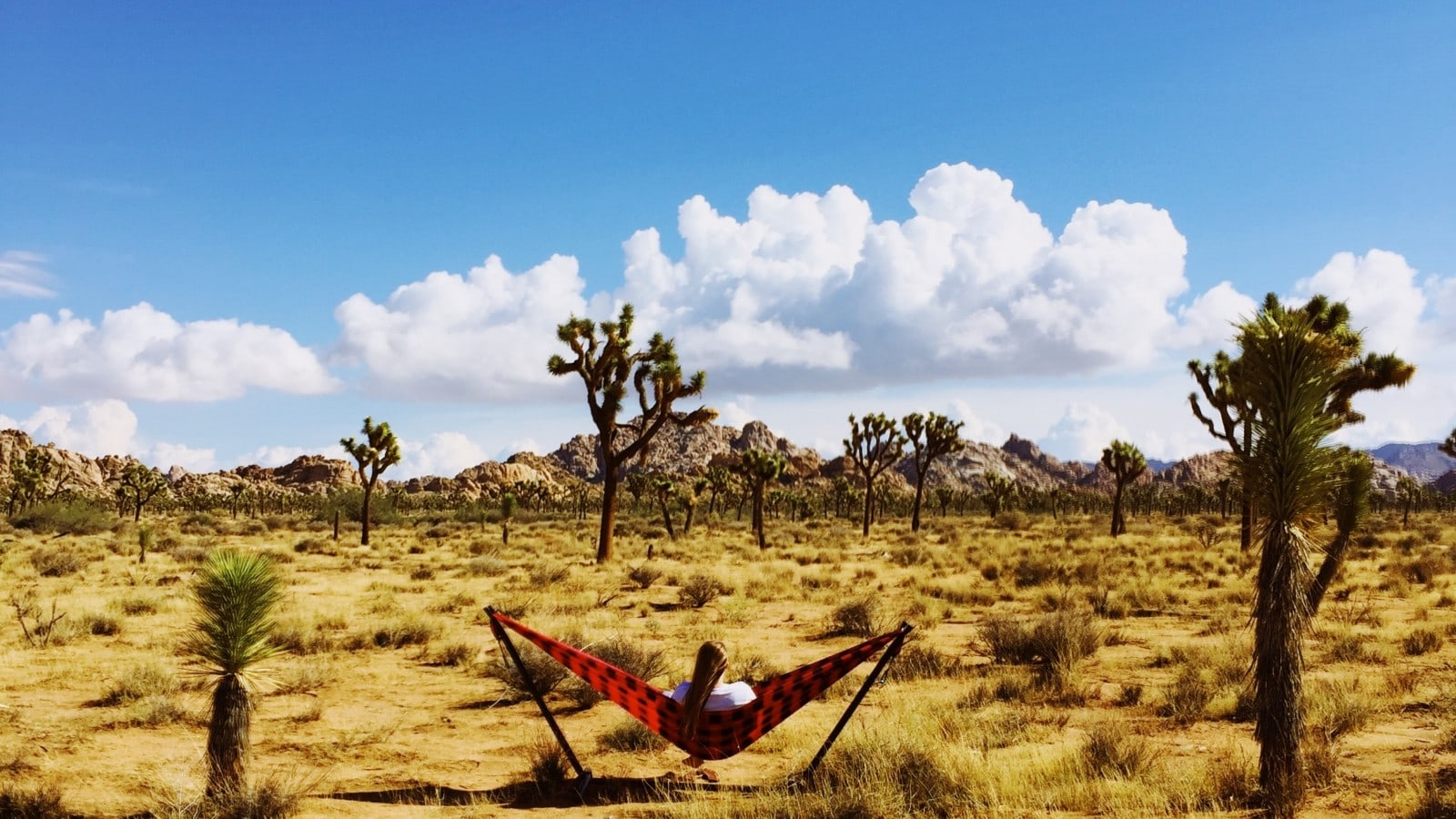Hanging with Care in Joshua Tree National Park