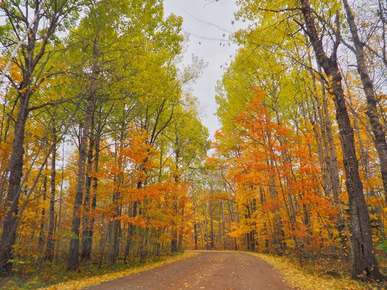 The 7 Best Places to See Fall Colors in Minnesota
