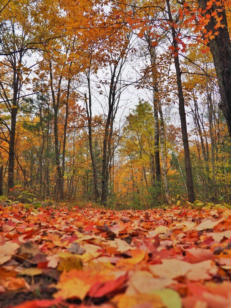 banning state park fall foliage