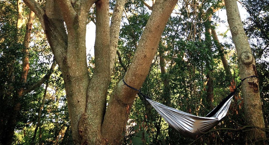 silver ENO hammock hung from big trees